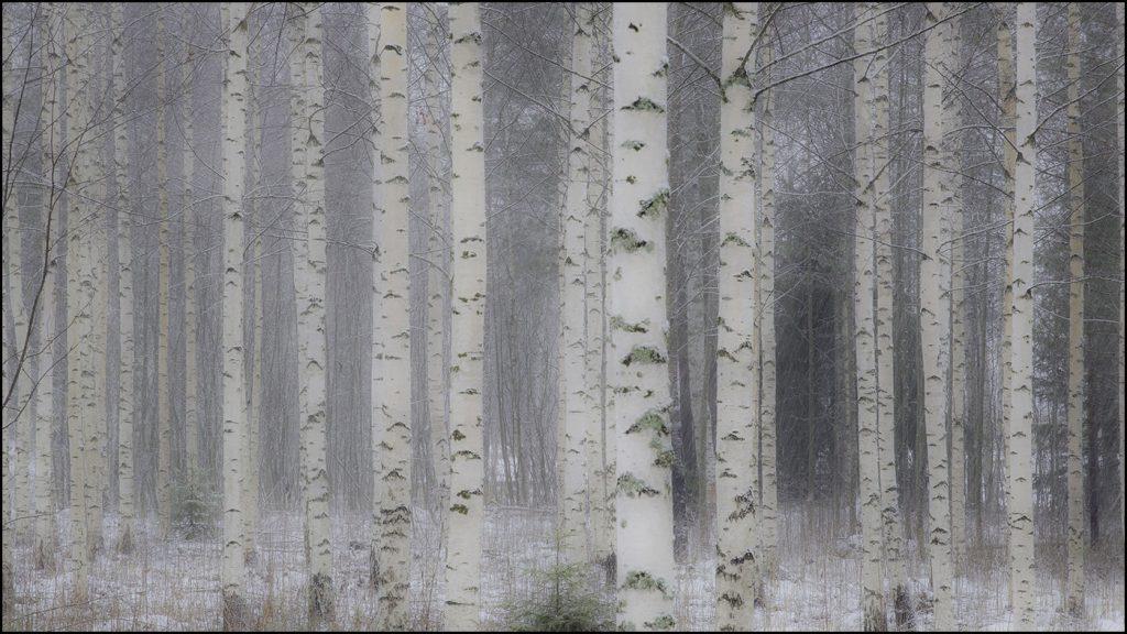Finlande 2019 © Yvan Martin 2019